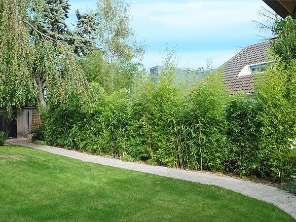 Am nagement de jardin bois jardins - Haie de jardin moderne ...